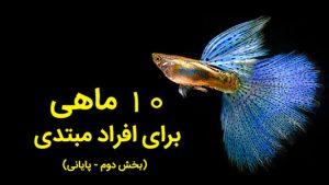 ماهی مناسب افراد مبتدی