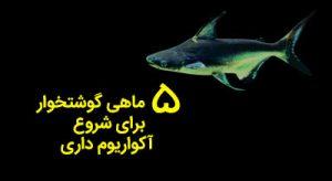 مقاوم ترین ماهی های گوشتخوار