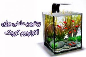 بهترین ماهی برای آکواریوم کوچک