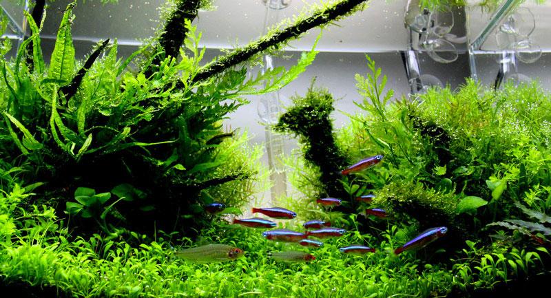 ماهی های آکواریوم پلنت