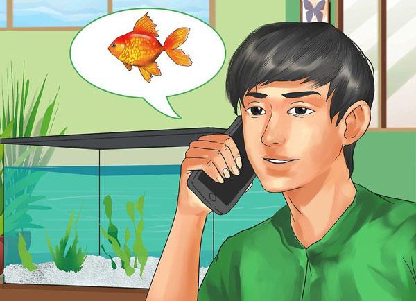 چگونگی انتخاب ماهی برای یک آکواریوم آب شیرین