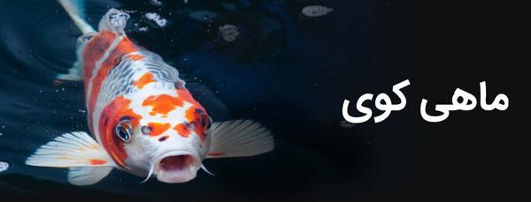 ماهی کوی