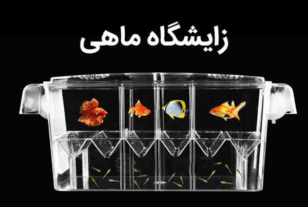 زایشگاه ماهی