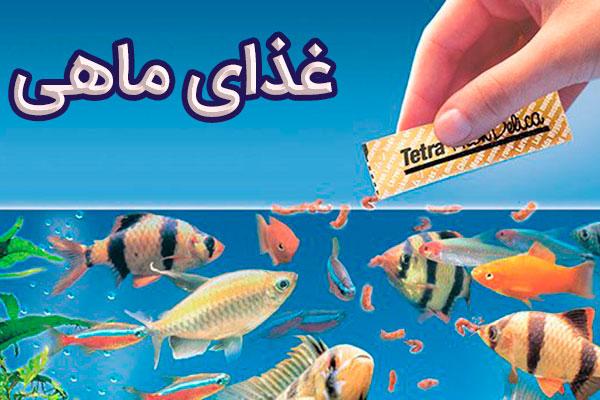 غذای ماهی