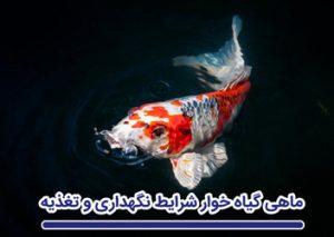 ماهی گیاهخوار