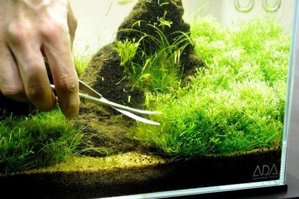 طراحی آکواریوم گیاهی