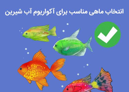 انتخاب ماهی مناسب برای آکواریوم آب شیرین