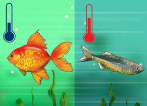 ماهی های آب شیرین