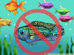 انواع ماهی آکواریوم آب شیرین