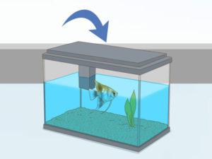تعویض آب ماهی آنجل