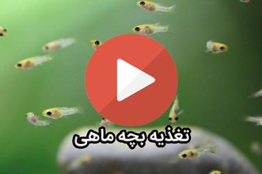 تغذیه بچه ماهی