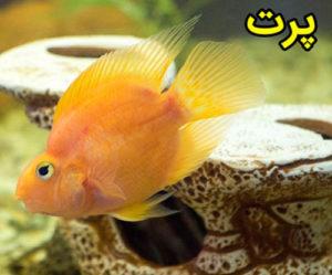 ماهی-پرت