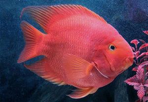 شرایط نگهداری ماهی پرت