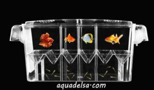 پرورشگاه ماهی