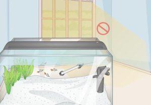 کنترل نور مخزن برای جلوگیری از رشد جلبک ها