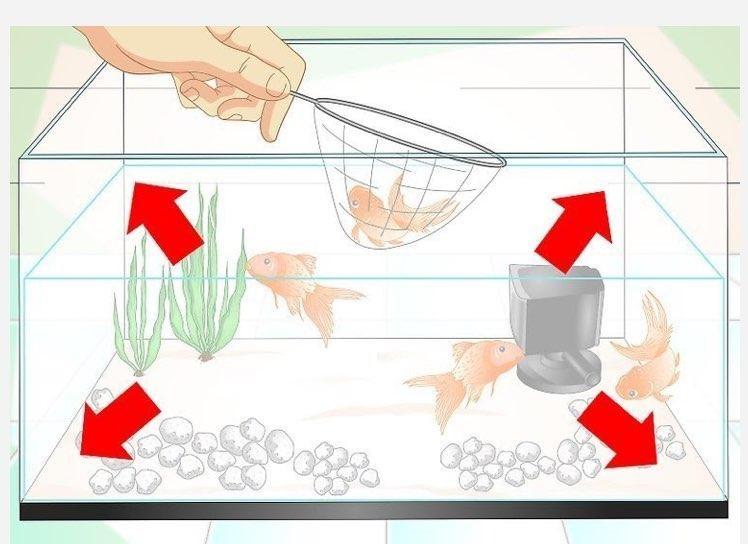 قرار دادن تعداد مناسب ماهی در اکواریوم