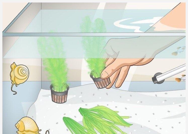 قرار دادن گیاهان طبیعی در مخزن
