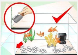 جلوگیری از رشد جلبک ها