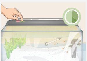 کنترل منبع نور برای جلوگیری از رشد جلبک