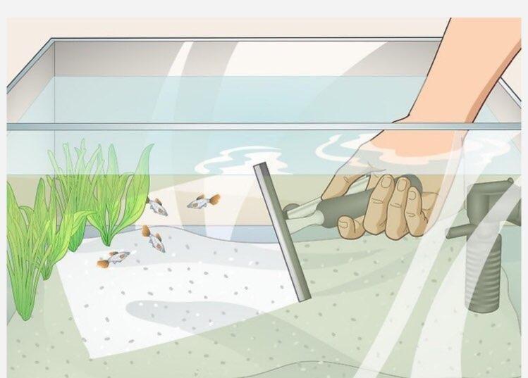 تمیز کردن شیشه اکواریوم