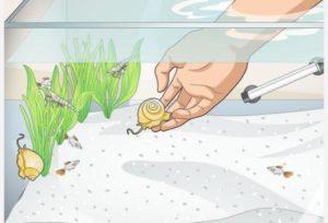 استفاده از جلبک خوارها